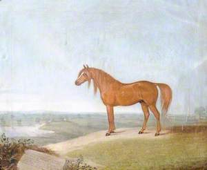 'Copenhagen', the Duke of Wellington's Charger