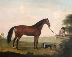 A Brown Horse, a Spaniel and a Groom