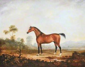Lord Anglesey's Horse 'Cossack'
