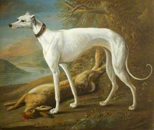A White Greyhound Standing over a Dead Hare