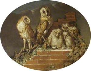 Barn Owls with Their Brood