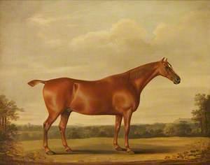A Bay Stallion in a Landscape