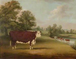 Hereford Cow near Cronkhill Farmhouse, 1858
