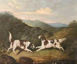 Two Springer Spaniels in a Landscape