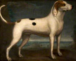 A Spotted Hound