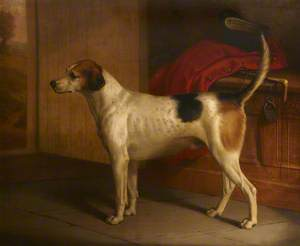'Guardian': Portrait of a Foxhound