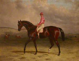 'Broomilaw' with Jockey Up on Epsom Downs, with Horses Being Exercised