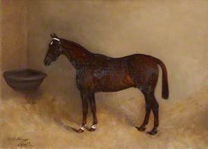 'Carlow', a Bay Horse in a Stable