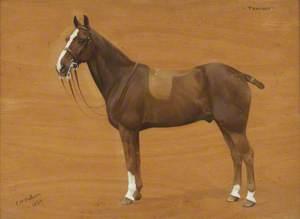 'Tommy', a Bay Pony