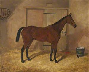 'Carrick', a Bay Hunter in a Stable
