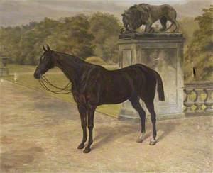 'Charlestown', a Dark Hunter, by the Gardens at Mount Stewart