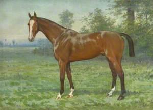 'Belgrove', a Hunter in a Field