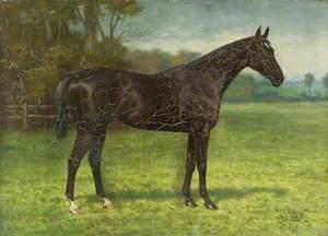 'Charlestown', a Hunter in a Field
