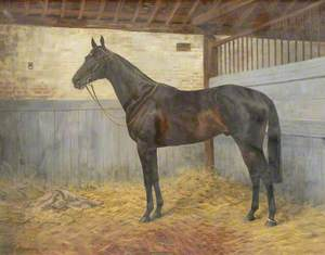 'Columcille', a Horse in a Stable