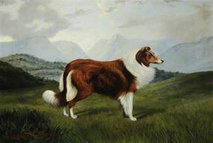 'Christopher': A Collie Dog in a Lake District Landscape