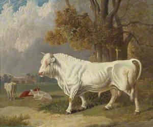 A White Bull, Fulbourn, Cambridgeshire