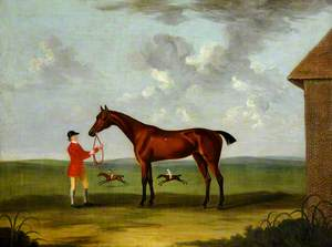A Bay Horse Called 'Fleacatcher'