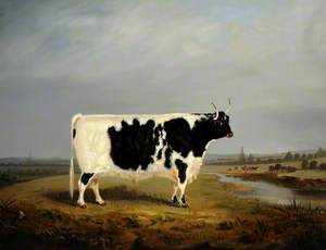 A Prize Black and White Bull in a Landscape