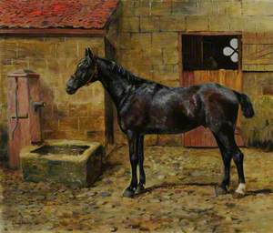 A Black Horse in a Courtyard