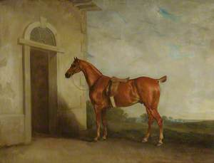Chestnut Hunter before a Stable