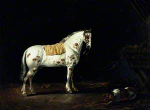 A Dappled Stallion with a Dog in a Stable