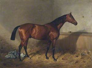 'Melton', a Bay Racehorse, in a Stable