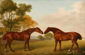 Two Horses in a Paddock