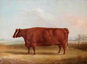 A Longhorn Cow in a Landscape, the Property of John Henry Whitmore-Jones of Chastleton