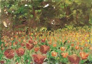A Field of Tulips