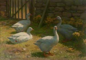 Geese in a Farmyard