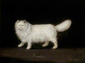 'Psyche', a White Persian Cat