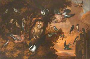 An Owl Being Mobbed by Other Birds
