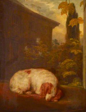 A Sleeping Spaniel Called 'Belle'
