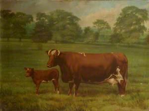 'Miss Belladrum' and Calf