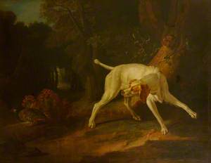 A Dog Pointing a Partridge