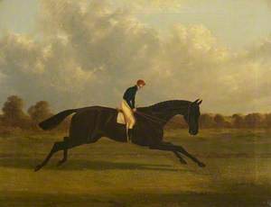 'Charles XII', Winner of the St Leger, 1839