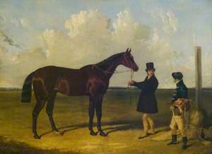'Mango', Winner of the St Leger, 1837