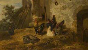 Poultry in a Midden