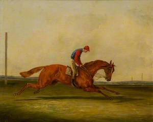 A Chestnut Racing with a Jockey Up, with Red Colours