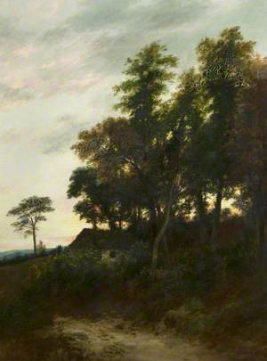 Trees in Perthshire at Dusk