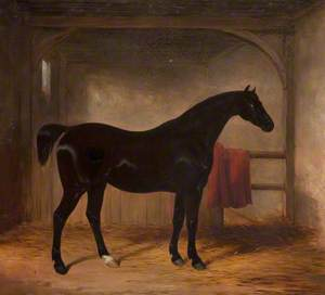 Black Horse in a Loose Box