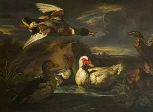 Wild Ducks with Kingfisher