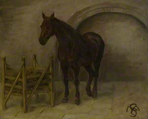 A Brown Pony