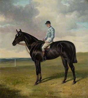 'Bendigo' with Jockey