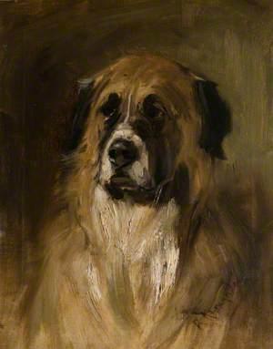 A St Bernard Dog