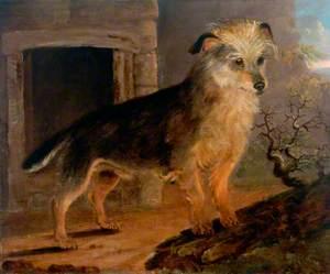 Terrier*