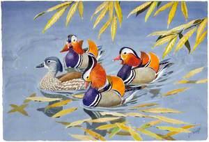 Mandarinau yr Hydref / Autumn Mandarins