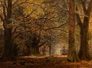 Mark Ash, near Lyndhurst, New Forest