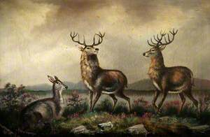 Two Stags and a Fawn