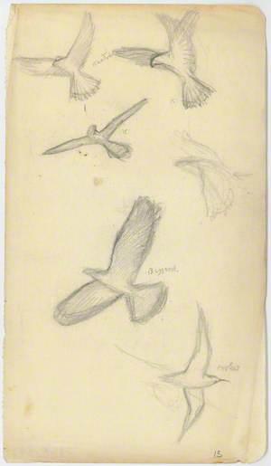 Astudiaeth o Adar yn Hedfan / Study of Birds in Flight